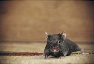 Rodent Proofing Services | Attic Cleaning San Francisco, CA
