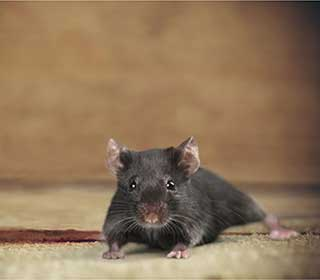 Rodent Proofing | Attic Cleaning San Francisco, CA